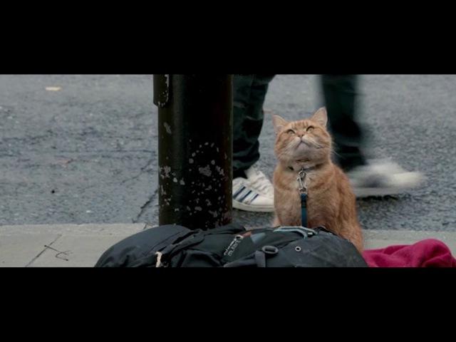 Паровоз до кубы - Кот и Человек