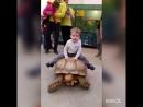 """""""Теперь покатай меня большая черепаха"""")))🐢👶"""