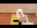 Сова смеется!хохма!Owl laughs