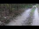 Эстонская гончая. Работа по черной тропе