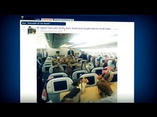 Саудовский принц купил охотничьим соколам 80 билетов на самолёт