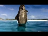 Walking with Dinosaurs - Episode 3 Cruel Sea