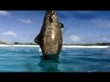 Walking with Dinosaurs - Episode 3 Cruel Sea