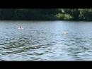"""""""Красиво плывут... Вон та группа в полосатых купальниках."""" (Кф Полосатый рейс)"""
