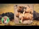 Мультики про животных. Мультик про ЛЬВА. Мультфильмы про животных
