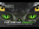 Как они нас убивают Тайная жизнь домашних животных / 18.08.2017