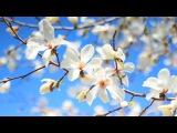 Весна Анапа 2017 Гелиос 44м4 (БОКЕ)