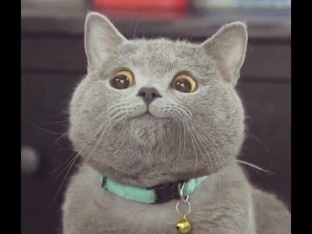 ПРИКОЛЫ С КОТАМИ ТОПовая подборка 2017Best Funny Cats Videos Compilation Try Not To Laugh