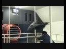 Зонт в кабине имитирующей ураган