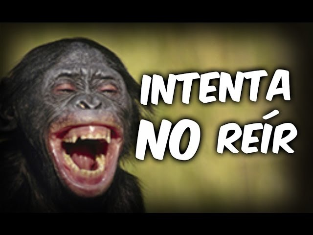 ANIMALES CHISTOSOS Y GRACIOSOS 03 Vídeos de Risa de Animales Perros Gatos y más