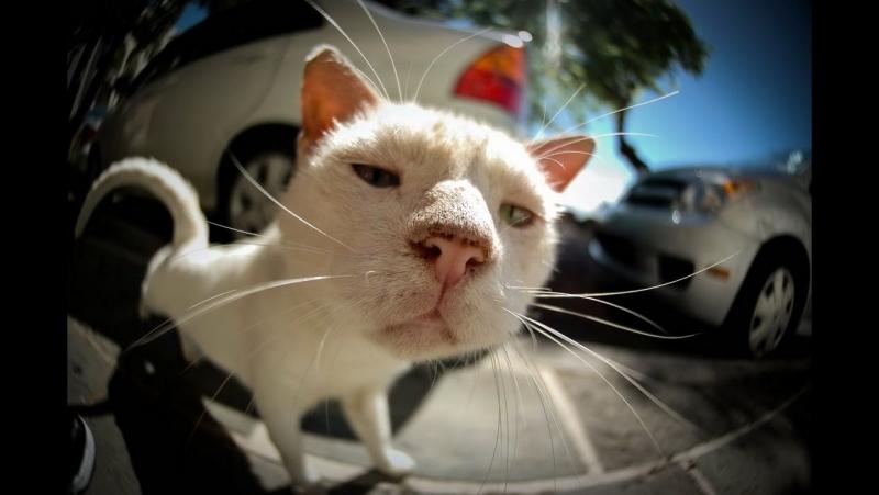 Кот-притворщик, не желающий идти гулятЬ.