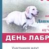 День лабрадора->Рязань->собаки
