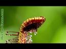 Росянка - плотоядное растение хищник для насекомых ДИКИЙ МИР И ПОВЕДЕНИЕ ЖИВОТНЫХ В НЕМ