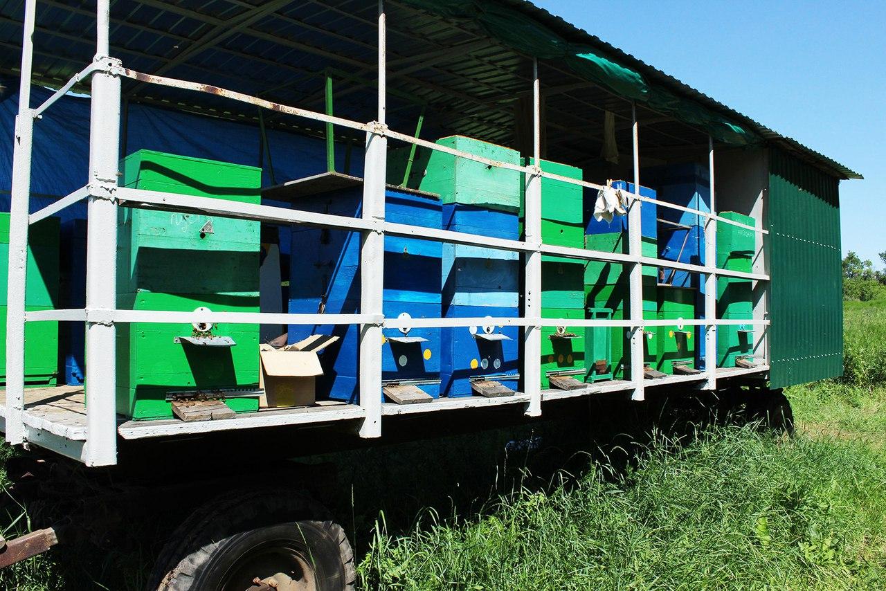 Донские пчеловоды завершают первую откачку меда