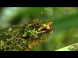 07. Мадагаскар - Остров чудовищ  Madagascar - The Island of Monsters