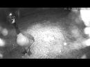 Койот крадет гусиные яйца (Egg Thief - Coyote Attacked Goose Eggs Footage!)