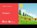 Learn English Via Listening | Beginner - Lesson 31. Flowers