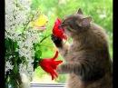 Чуете?.. Весной пахнет!..