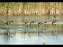 Северная охота на утку