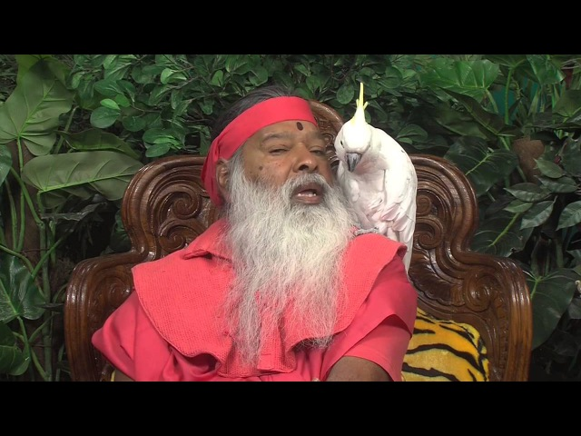 Parrots of Shuka Vana participate in Hanuman Chalisa Parayana Yagna