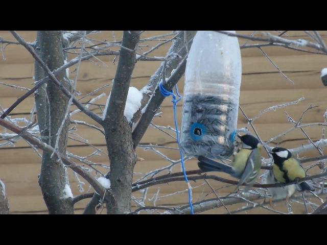 ★ Как сделать КОРМУШКУ только для СИНИЦ.Кормушка для птиц своимируками из бутылки.Домик для синиц.