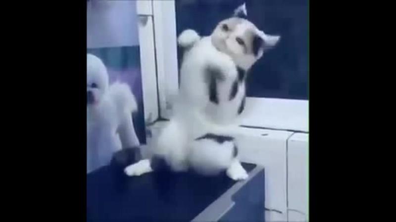 Cat Presley · coub, коуб
