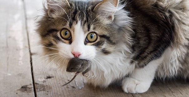 Ежедневный пост пристройки и поиска потерянных домашних животных.