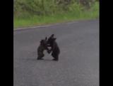 Да не ходят в России медведи по дорогам, они на ней вольной борьбой занимаются...