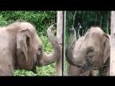 10 Самых умных животных!