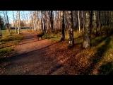 Пирсей на прогулке