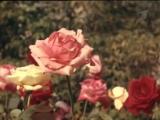 Ренат Ибрагимов - Дарите женщинам цветы