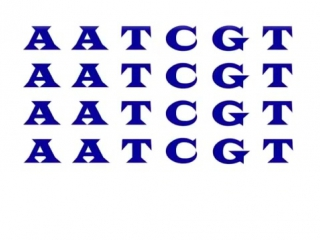 Генетика 101, часть 2_ Что такое ОНП