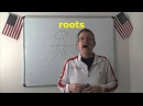 Learn English Daily Easy English Expression 0688 roots