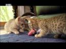 Симпатичные котята Animal Planet Россия