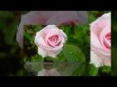 Розовый вальс любви Евгений Дога