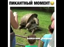 Страсть korotkie_prikoli прикол лайк животные приколы
