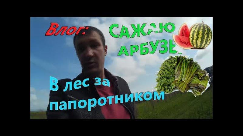 Выращиваем арбузы / Еду в лес за папоротником / Посол приморский