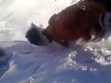 Коровы исчезают в снегу