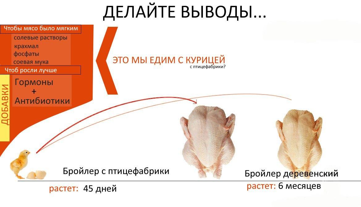 Антибиотики в мясе