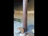 кому маленького тигрика? йому три місяці. дуже миле кошеня. немаю куди забрати ((