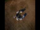 лошадки в синхронном танце