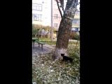 ягдтерьер Патрон и дерево 3