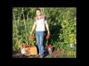 Выращивание томатов на открытом грунте из семян - это просто