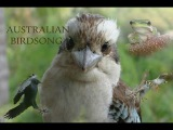 Relaxing Sounds of Nature ~ Australian Birdsong ~ Dawn Chorus in Fryers Forest