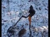 зимний поиск с металоискателем (лес)