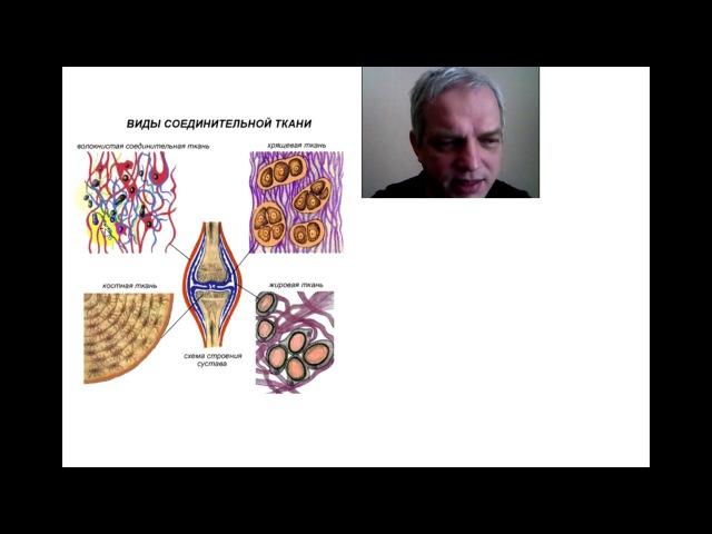 Характеристики тканей человека и их рисунки