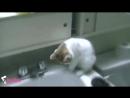 Приколы С Кошками.. Смотреть Доконца... До Слёз 2017