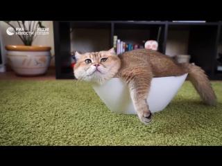 Любимец подписчиков в Instagram кот Хосико
