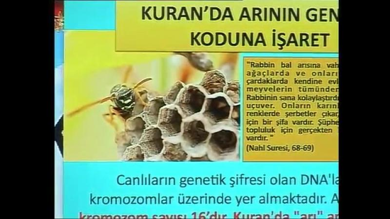 Kuran mucizeleri Kuran'da arının genetik koduna işaret