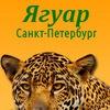 """Ветеринарный центр """"Ягуар"""""""